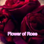 Flower of Rose Sad Love Story – in Hindi